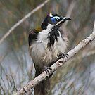 Grumpy Bird by byronbackyard