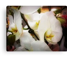 *White Orchid - Plaza* Canvas Print