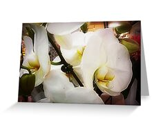 *White Orchid - Plaza* Greeting Card