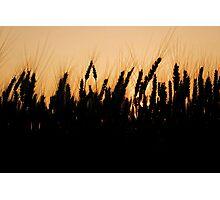 Golden Hour Photographic Print