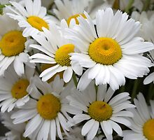 Betty's Daisies by Martha Medford