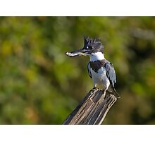 Fish on! - Belted Kingfisher Photographic Print