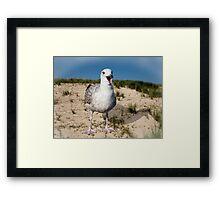 Seagulls Dune Framed Print