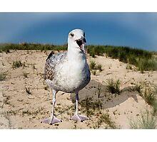 Seagulls Dune Photographic Print