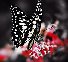 Butterfly on Flower by Nhan Ngo