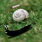 Snail Leaving Home by Rob Johnston