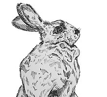 Beatrix Potter Inspired Inked Bun Photographic Print
