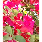 iPad Case - Bougainvillea Display by Francis Drake