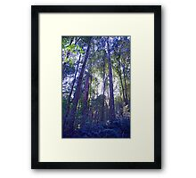 Sun Glimmers through the Trees - Triplet Falls Framed Print