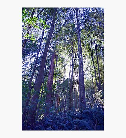 Sun Glimmers through the Trees - Triplet Falls Photographic Print
