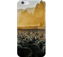 Drenching the sheep - Glenmore farm iPhone Case/Skin