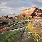East Lothian coast by Christopher Cullen