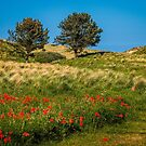 Northumbrian Poppies by vivsworld