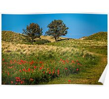 Northumbrian Poppies Poster