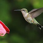 Hummer at The Feeder by Todd Weeks