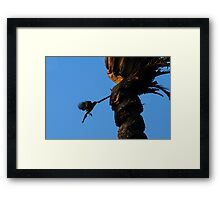Flying while drinking Framed Print