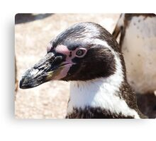 Beaky Penguin Canvas Print