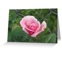 Pink rose and wire fence Greeting Card