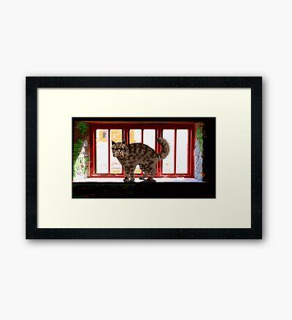Cat on a Sill Framed Print