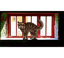 Cat on a Sill Photographic Print