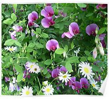 Sweetpea and Daisies Poster