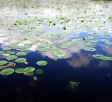 Clouds in Lilypads by katherinepaulin