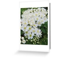 flowers in the wild Greeting Card
