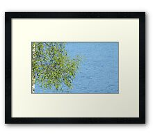 birch bunch of leaves the lake in the background Framed Print