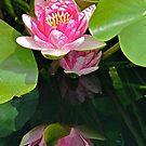 My Best Reflection - Waterlily by Cee Neuner