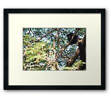 Howler Monkey Framed Print