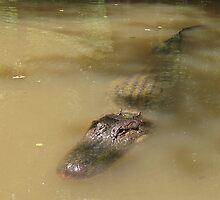 Swamp Gator by Rachel Flanagan