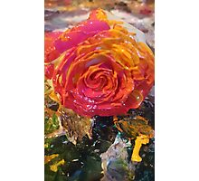 Acrylic Rose Photographic Print