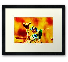 Sheen Framed Print