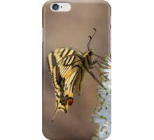 ein gelber Schmetterling auf einer Blume iPhone Case/Skin