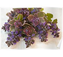 Bugleweed Blossoms  Poster