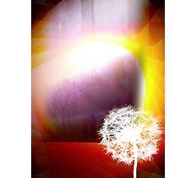 Phenomena Photographic Print