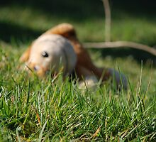 Teddy bear in the grass by HannahLstaples
