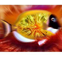 Fish Photographic Print