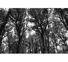 Webbed Trees Photographic Print