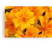 Tagette Blossoms Macro Canvas Print