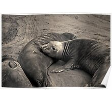 Elephant Seals IV Toned Poster