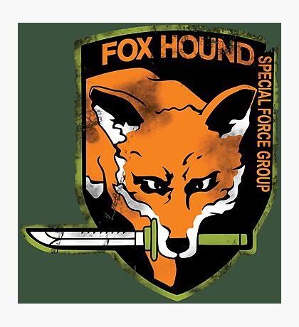 Foxhound Photographic Print