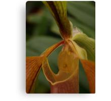 Bristle Orchid  Canvas Print