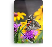 Painted Lady Butterfly III Metal Print