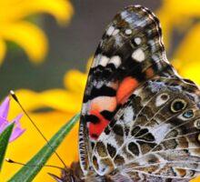 Painted Lady Butterfly III Sticker