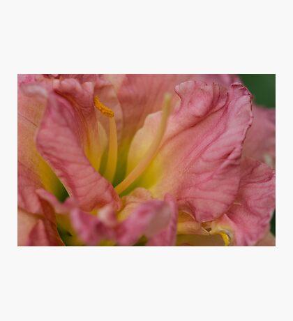 La douceur du rose Photographic Print