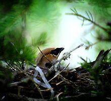 A nest by lumiwa