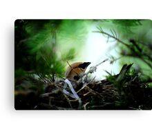 A nest Canvas Print