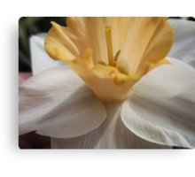in time of daffodils(who know Canvas Print