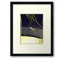 Dwarf Seahorse Framed Print